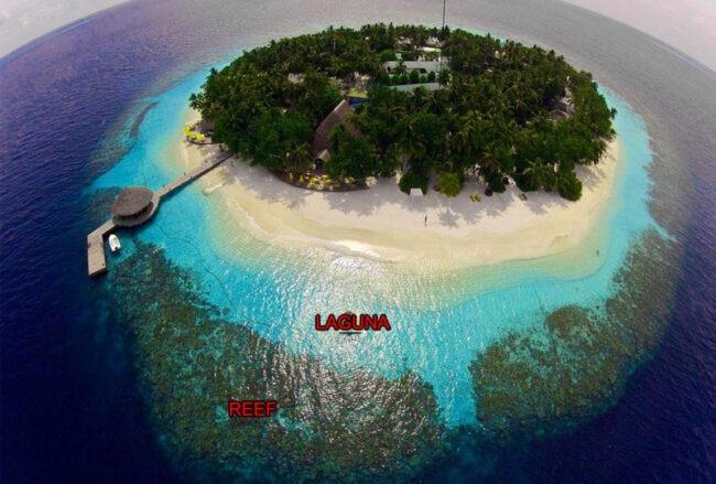 reef laguna maldivas