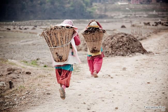 campos cultivo valle katmandu