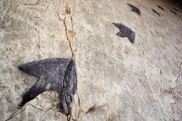 huellas de los dinosaurios en la rioja