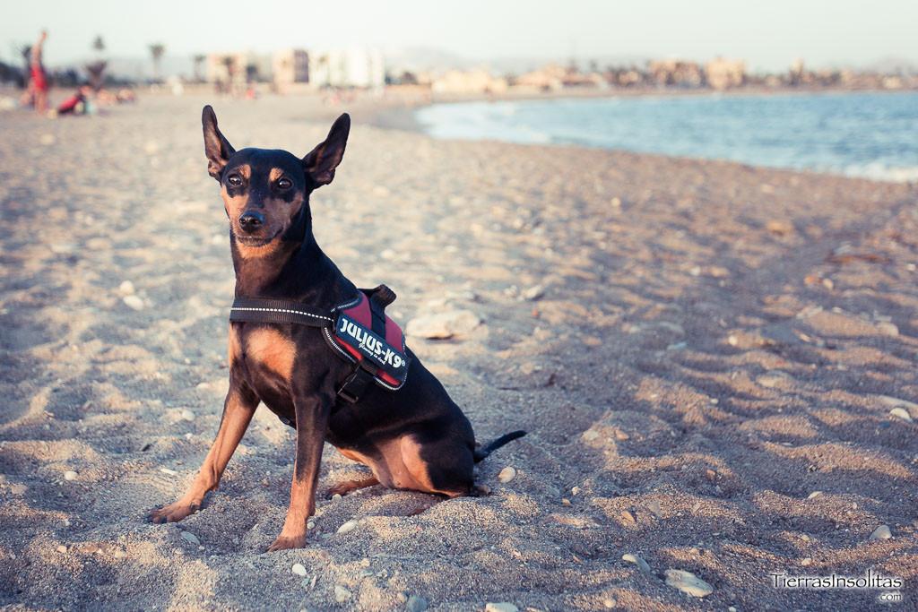 playa canina de sierra de las moreras