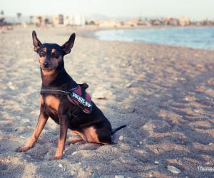 playas que admiten perros en murcia