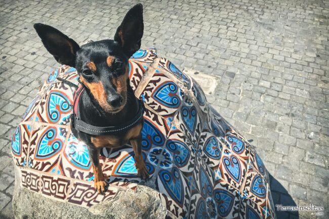 oporto portugal con mascota