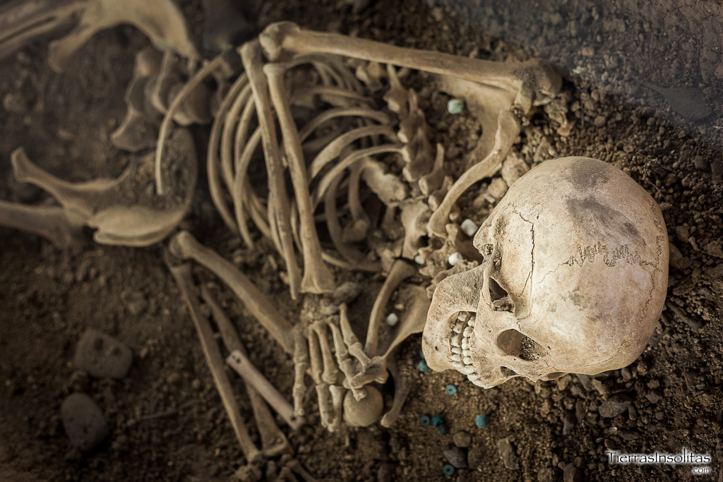 esqueleto museo arqueológico álava