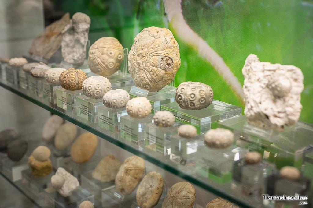museo ciencias naturales vitoria