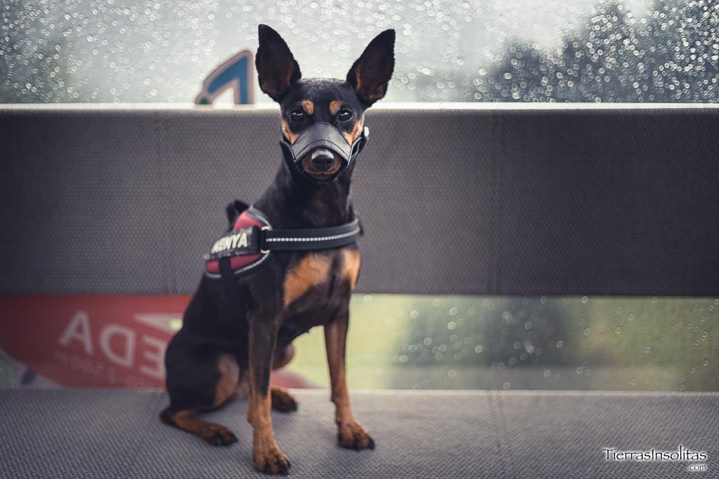perros teleférico seceda