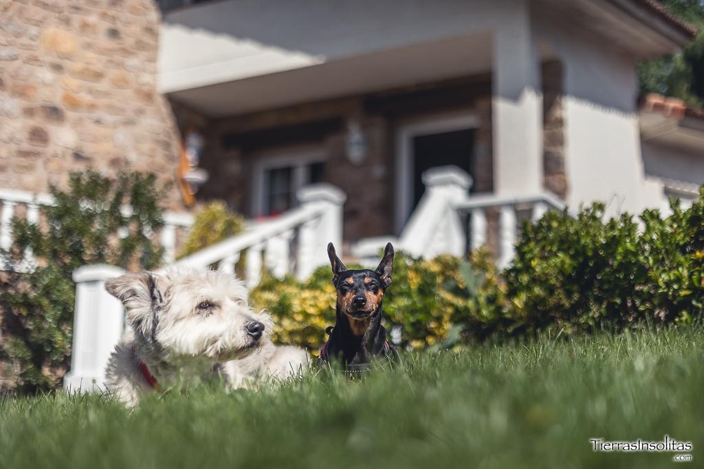 perros casa rural los pinos