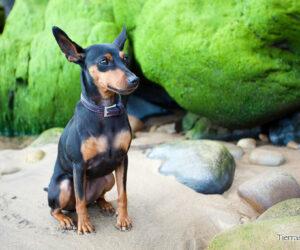 playa de dicio perros cantabria