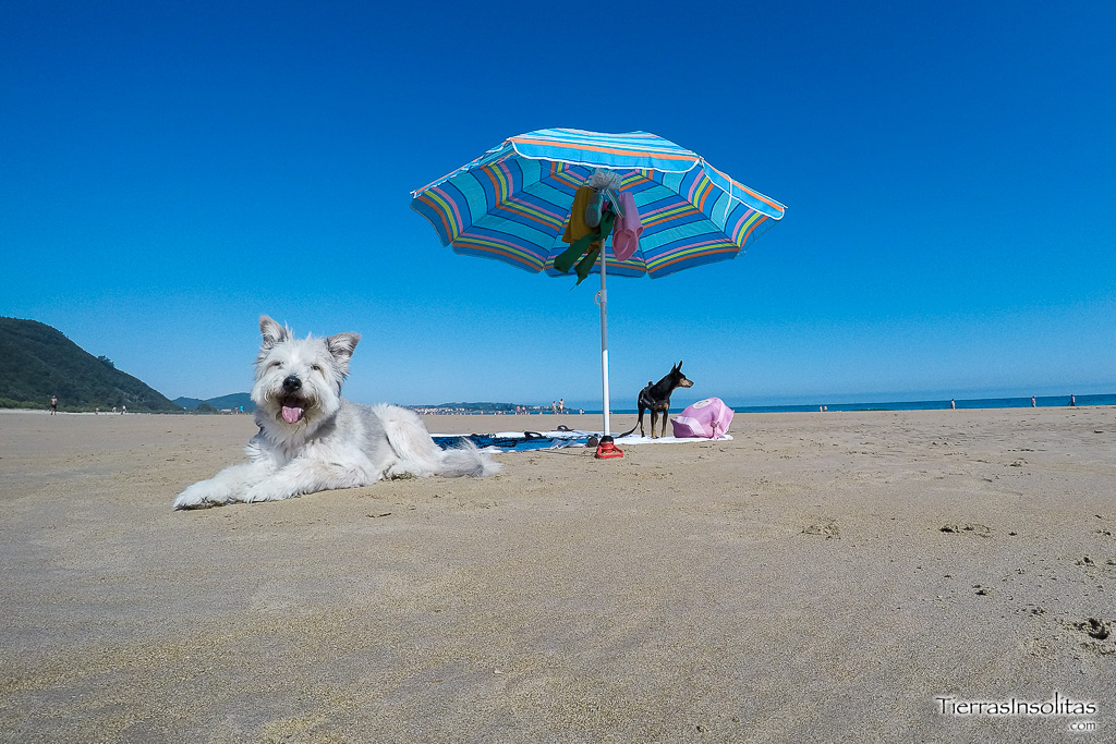 playa canina trengandin noja perros cantabria