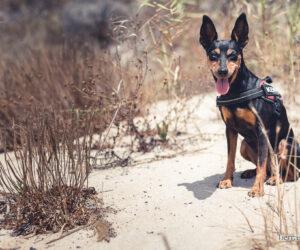 playas para perros en huelva